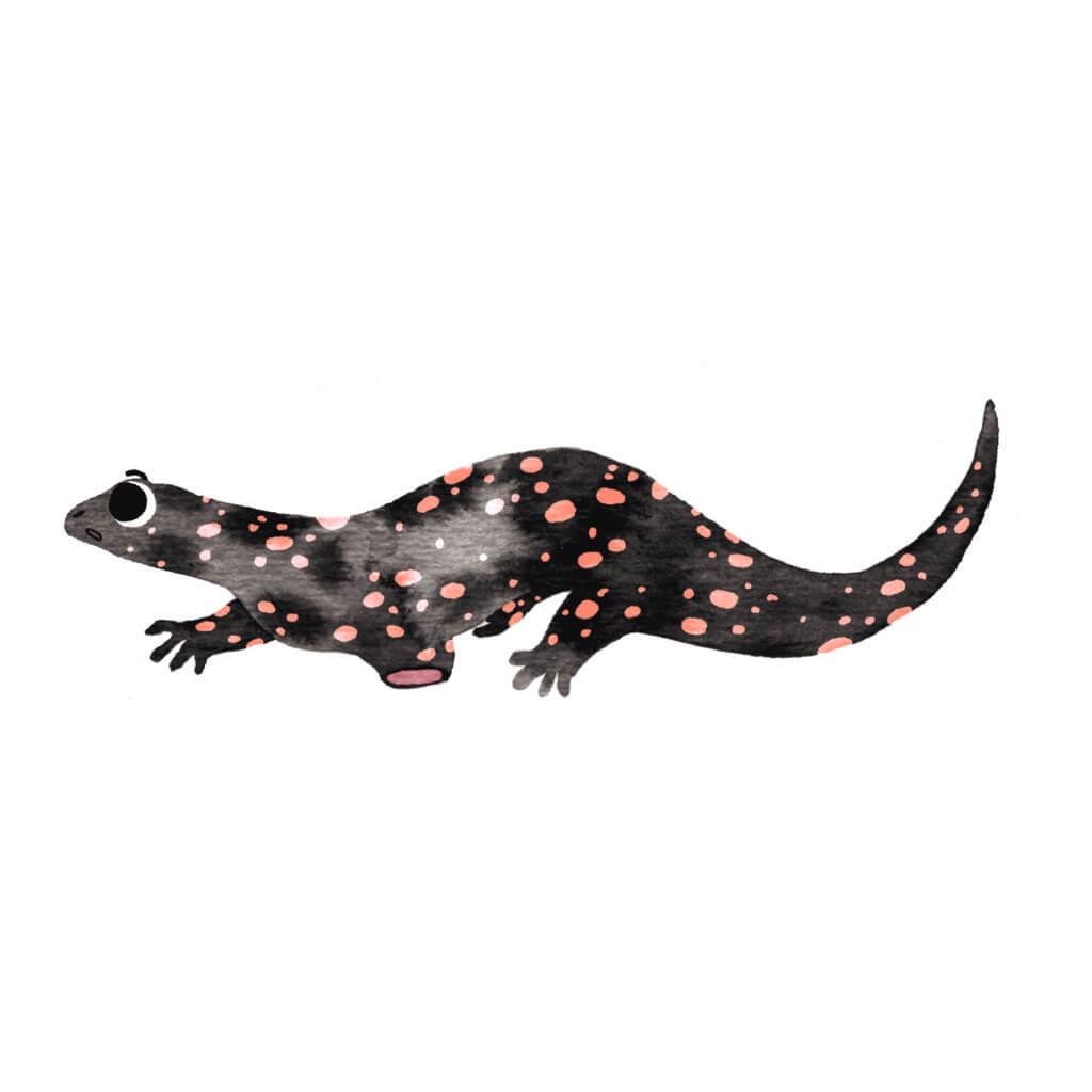 Bibelfortællinger for børn: Adam, Anna og hullet i taget - Illustration af sort salamander